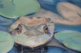 Sophia's Frog